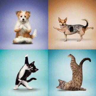 Animals Doing Yoga