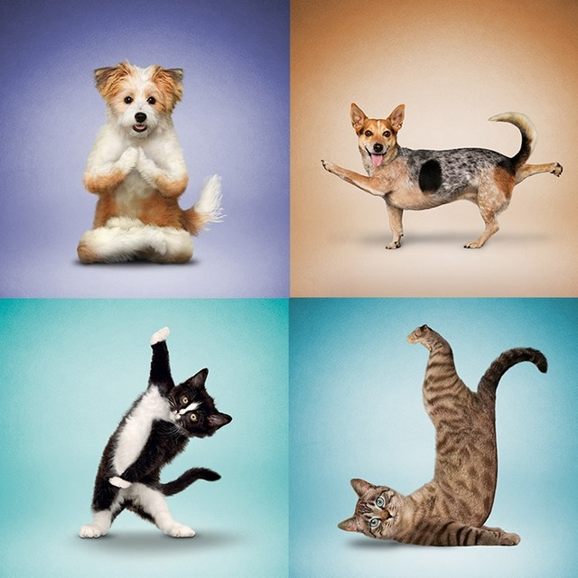Animals Doing Yoga